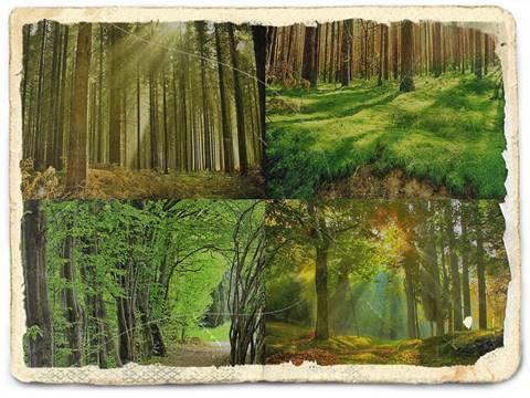 Pengertian Lingkungan Hidup Menurut Para Ahli