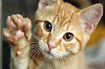 Arti Mimpi Kucing Menurut Islam